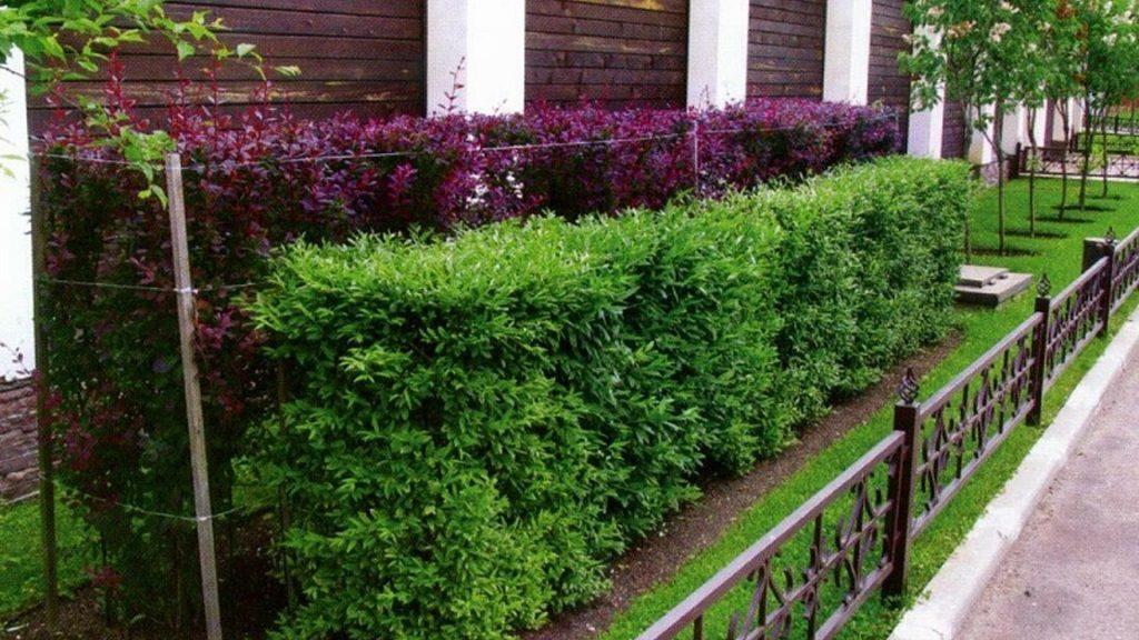 ограда-plants10