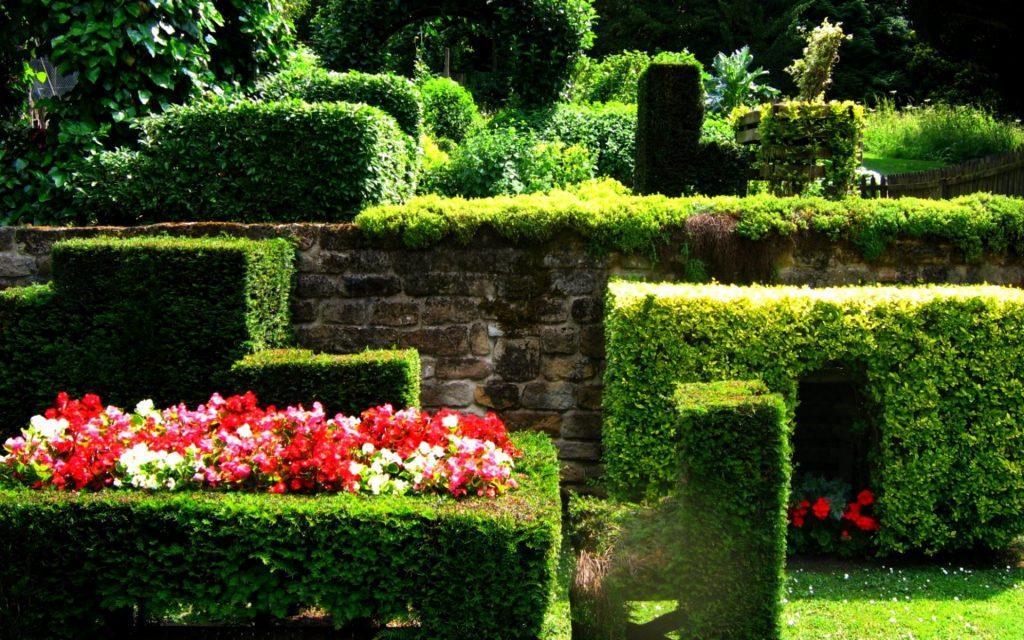 ограда-plants10666