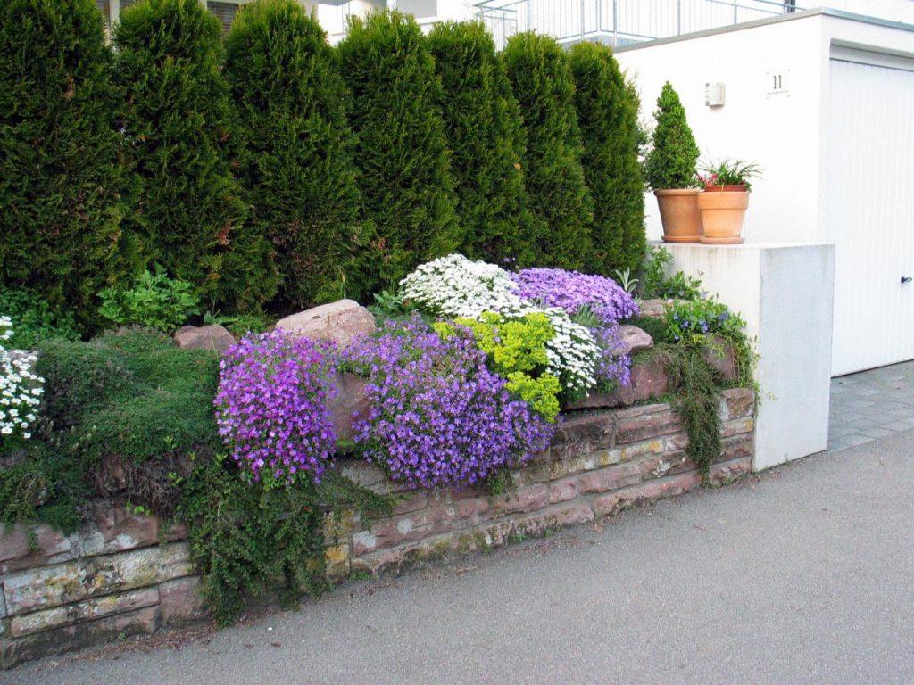 ограда-plants6661