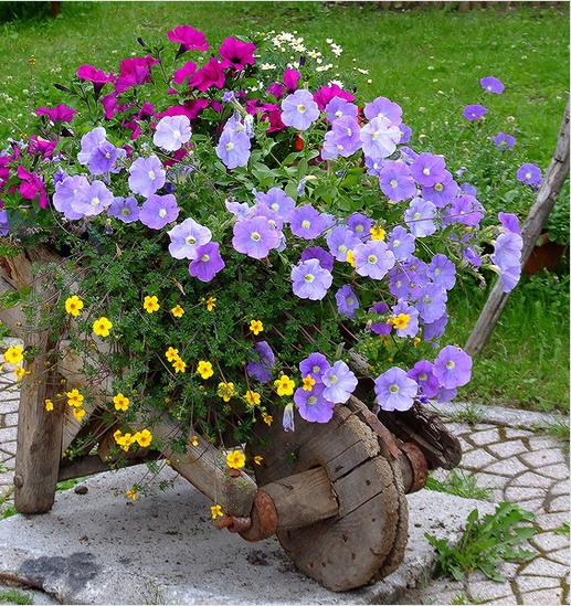цветя garden12