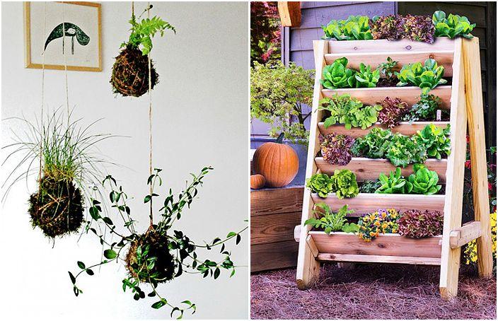 Оригинални начини за създаване на вертикална градина.