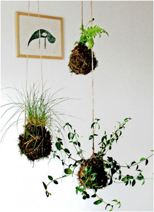 Растения, окачени от тавана върху нишки.