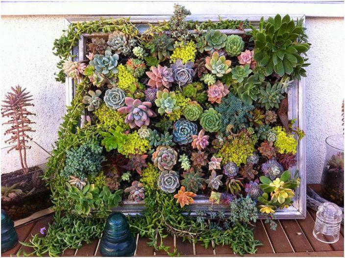 Растения в рамка.