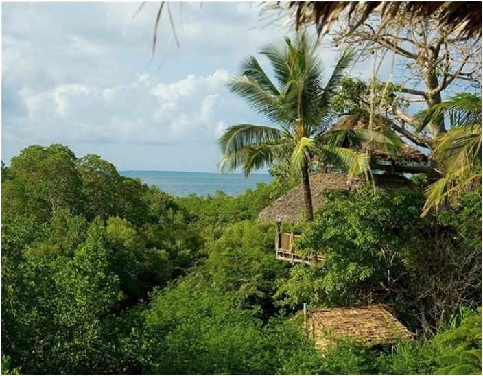 Ekologiczny hotel z pokojami ustawionymi na baobabie.