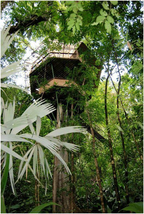 Hotel położony jest wysoko na drzewie.