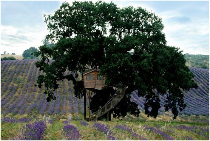 Przytulny hotel na drzewie.