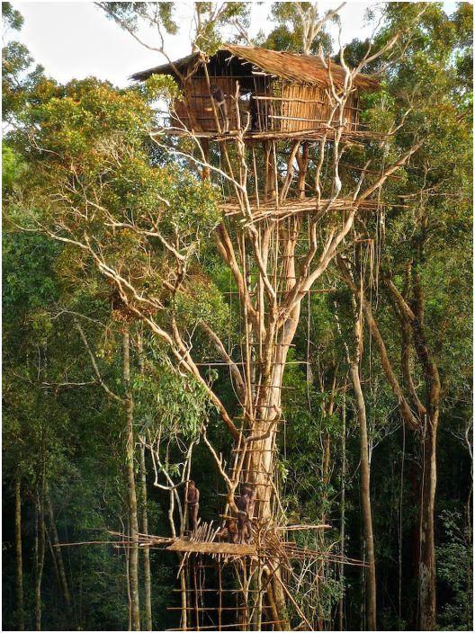 Chata plemienia Korowai, wzniesiona na dużej wysokości.