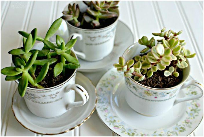 Старите нежелани чаши могат да бъдат превърнати в стилни саксии за цветя.
