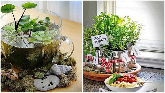 Примери за прекрасни мини-градини у дома.
