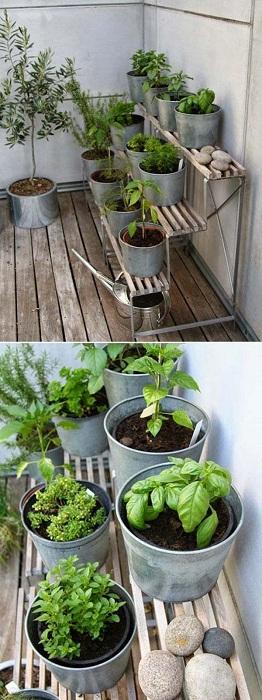 Симпатичное решение для того чтобы удобно обустроить мини-сад разместить его в ведрах одного размера.