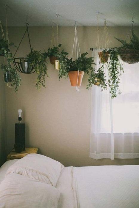 Хубав вариант за декориране на мини-градина в хола или в спалнята - в окачено състояние.