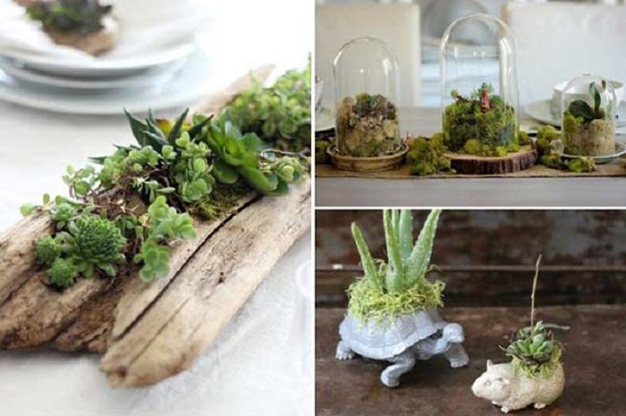 Прекрасное решение для оформления мини-сада в домашних условиях.