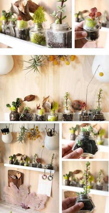 Миленький мини-сад с маленькими горшочками, то что нужно для любой комнаты.
