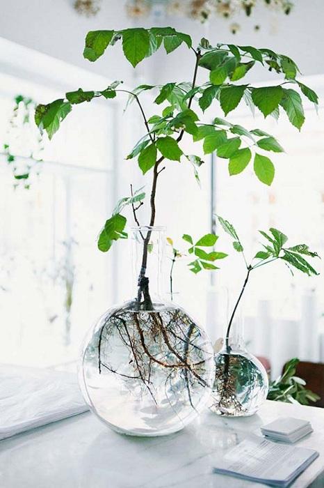 Хубав и интересен вариант за декориране на домашна мини градина в прозрачни кръгли вази с кристално чиста вода.