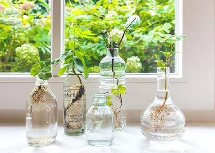 Красиво и просто одновременно смотрится мини-сад, цветы которого размещены в различных прозрачных баночках.