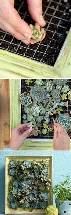 Симпатичен вариант за дизайн на мини градина е да я поставите в рамка, което от своя страна ще я украси.