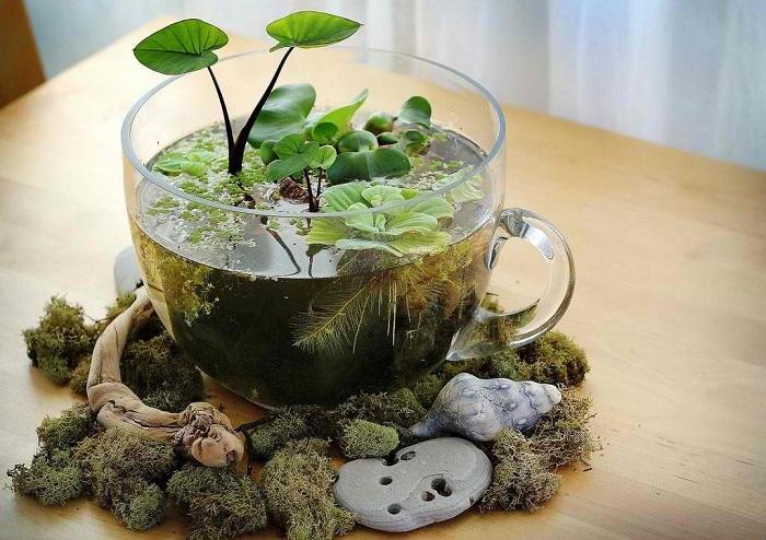 Мини градина е една от възможностите за самоизразяване, чудесен начин е да я поставите в чаша.
