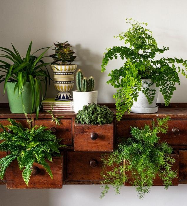 Хубав и креативен вариант за декориране на мини градина в мини скрин, който ще украси всяка стая.