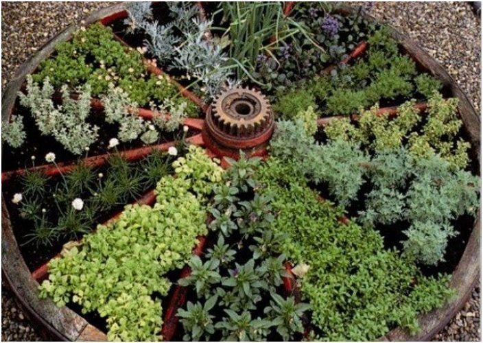 Отличен вариант за засаждане на растения в колело, разделено на сектори, е много удобен и сладък.