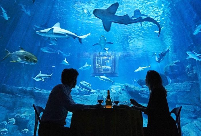 Det parisiske akvariet har en ny attraksjon - et undervannsrom.
