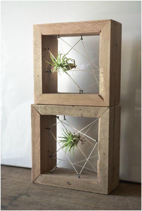 Растение в деревянной рамке.