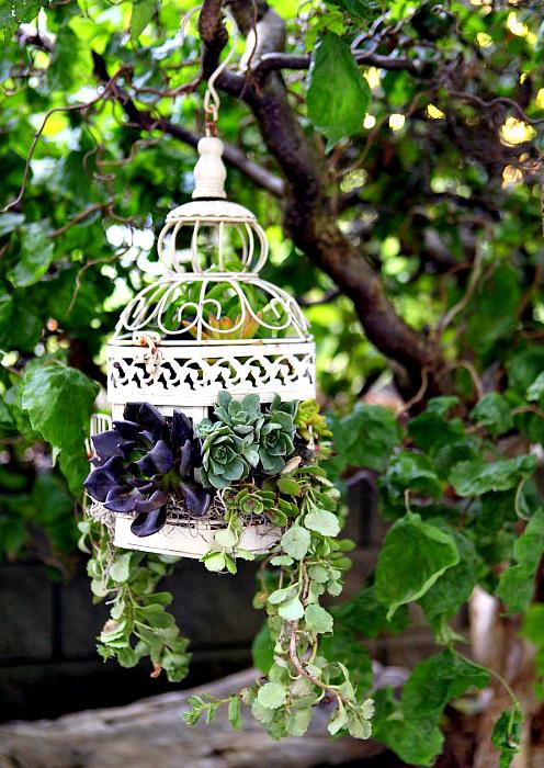 Мини градина в реколта птица клетка.