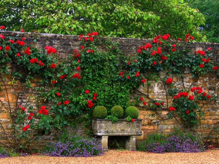 Ограда, украсена с катерещи рози.