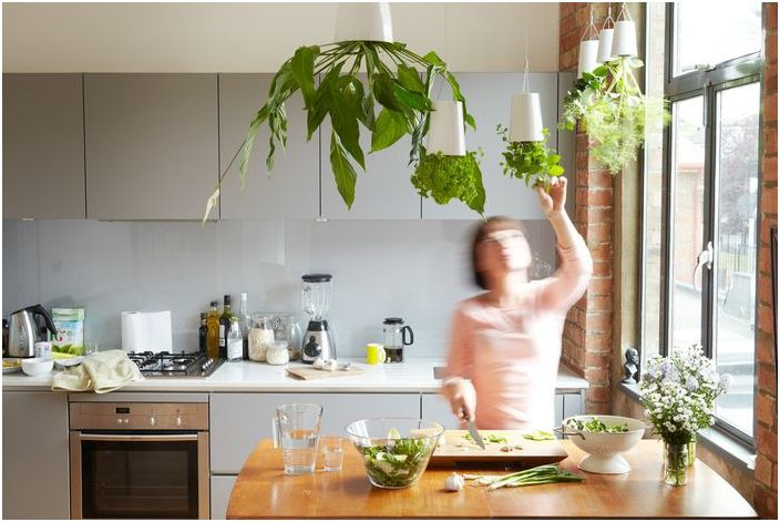 Riippuvat kukat keittiön sisätiloissa