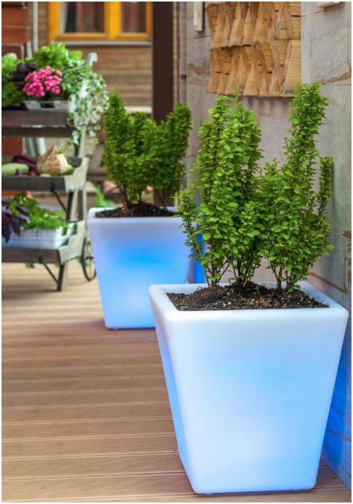 саксии за цветя в дизайн на вътрешен двор