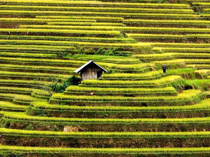 Dom otoczony jest tarasami ryżowymi.