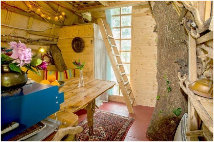 Tree Sparrow House to dom zbudowany wokół drzewa.