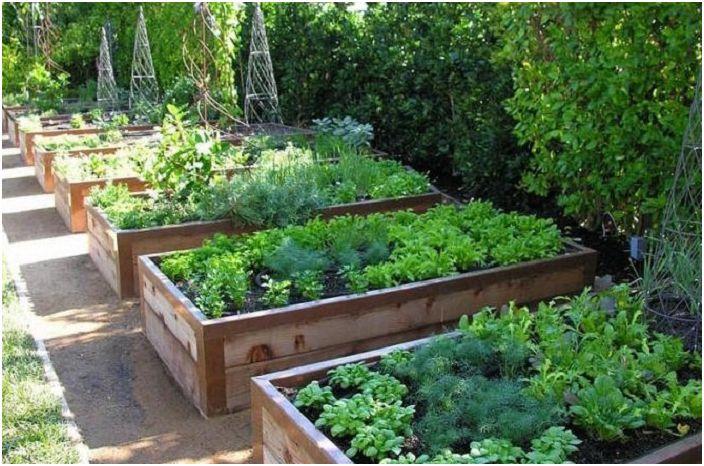 Много е удобно да засадите зеленчуци, тъй като те узряват, което ще направи градинарството по-практично.