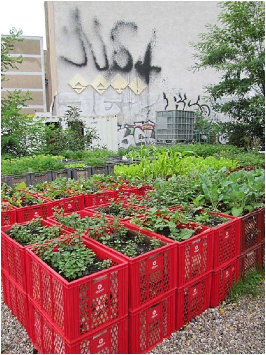 Пластмасови кошници могат да се използват за издигната градина над нивото на земята, което ще създаде интересни варианти за украса на градина и зеленчукова градина.
