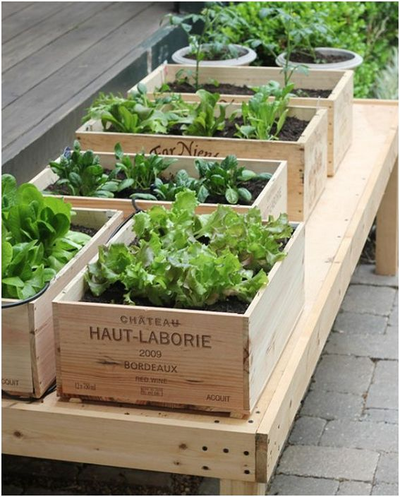 Чудесен вариант е да използвате кутии за вино, за да създадете пространство за засаждане на зеленчуци и плодове.