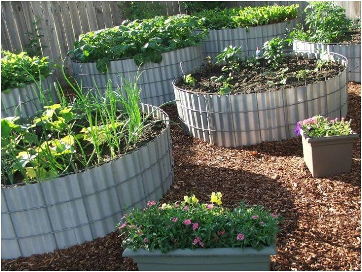 Металните листове се използват като легло за засаждане на разсад в градината.