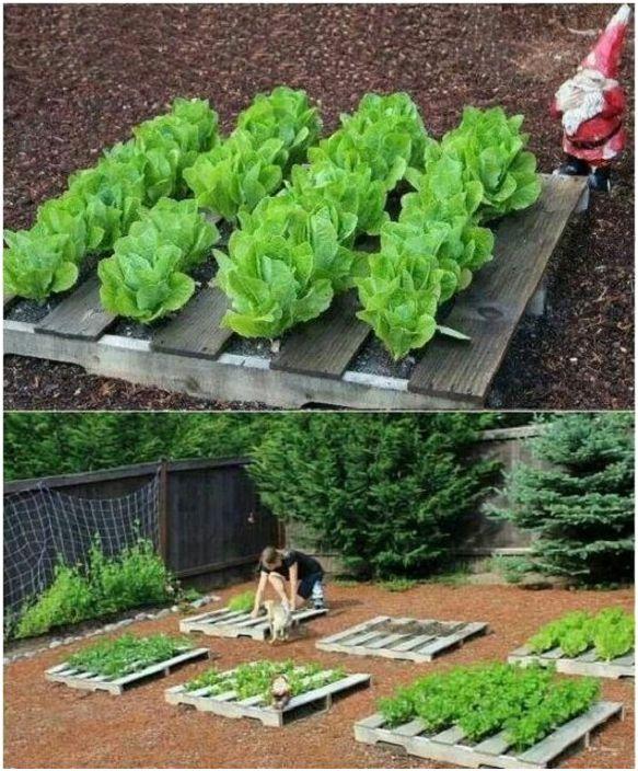 Отличен вариант за декориране на лехите за засаждане на зеленчуци с евро палети, което удобно организира пространството.