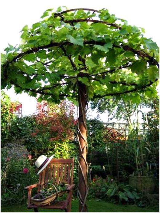Оригиналната опора за катерещи растения.