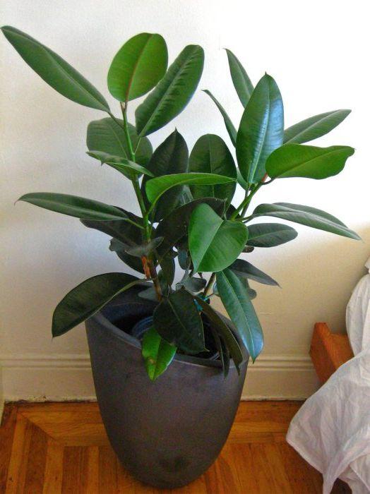 Стайните растения пречистват въздуха в апартамента, а също така служат като декоративен елемент.