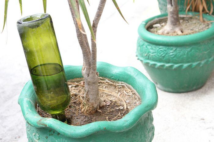 Като залепите бутилка вода в саксия с растение, можете да забравите за поливането на саксията за известно време.