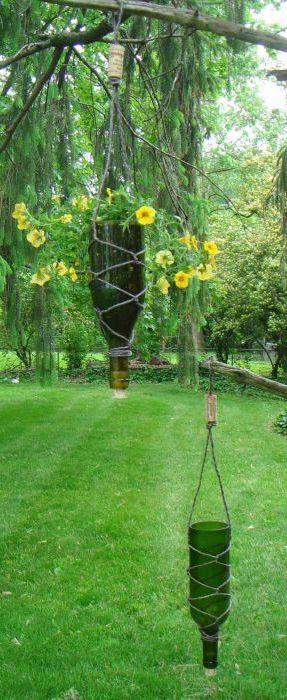 Необичайно растение саксия.