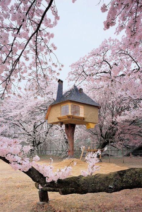 Приказна къща с чаено дърво.