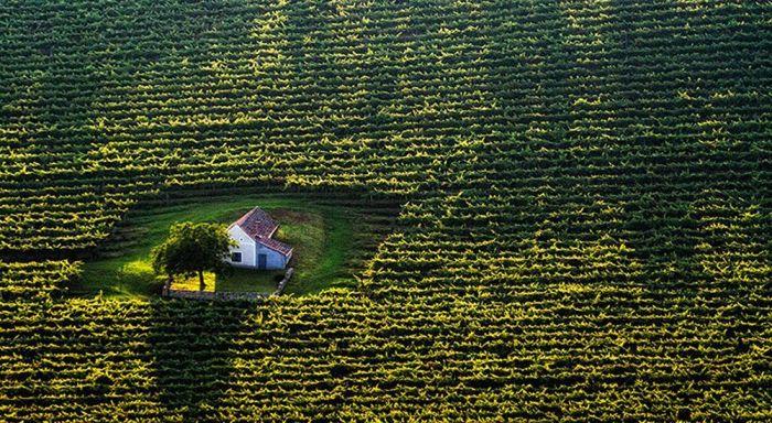 Mały domek na środku dużego pola.