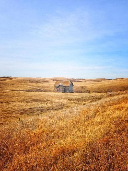 Dom w środku złotego pola.