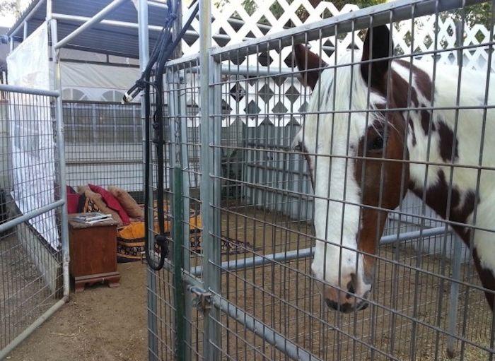 Nocleg w klatce obok konia. Poczuj zapach natury w dosłownym tego słowa znaczeniu.
