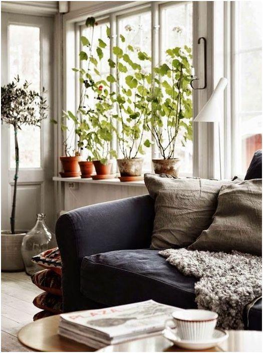 Стайни растения на перваза на прозореца