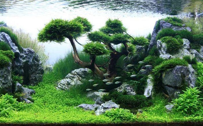 Нова перспектива за акваризма