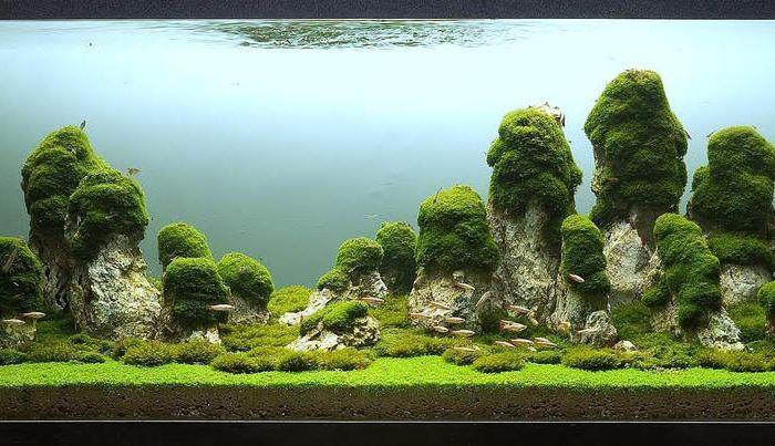Стълбовете на Земята. Написано от Паскал Буонпан от Италия. Обемът на аквариума е 400 литра.