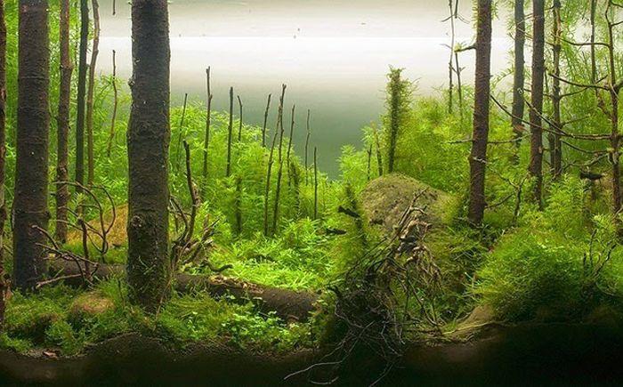"""""""Утро в гората"""""""