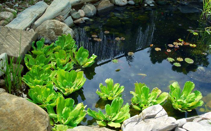 Малко езерце в задния двор