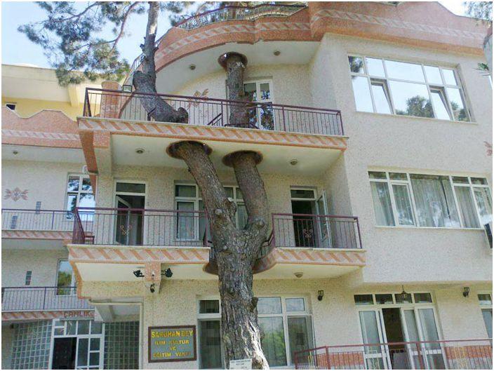 Dom, który został zbudowany bez uszkodzenia drzewa.